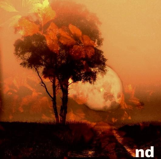 #Warm #leaf #dchorizon#fr #freetoedit #p #photography #nature #c #colorful #colorsplash #collage #monochrome #silhouette