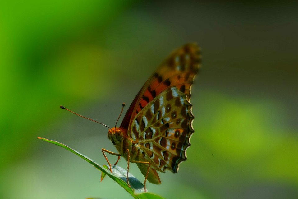 #nature #orange #butterfly
