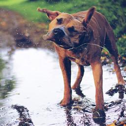 dog rain fun interesting canon