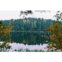 nature lake forest lithuania