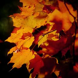falljourney yellow intense beautiful photography
