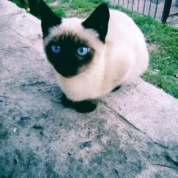 my cat very beautiful like