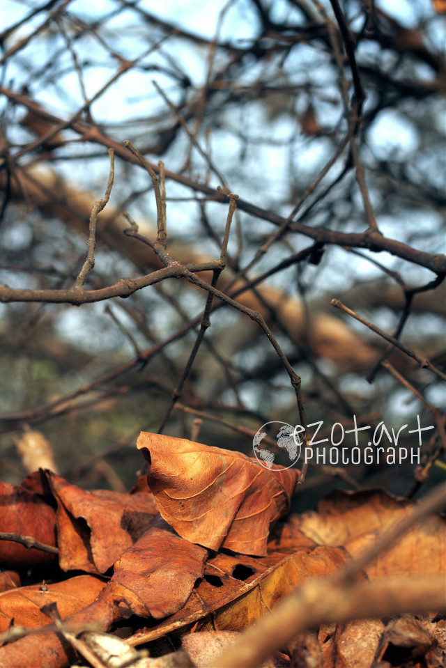 New #photography #nature