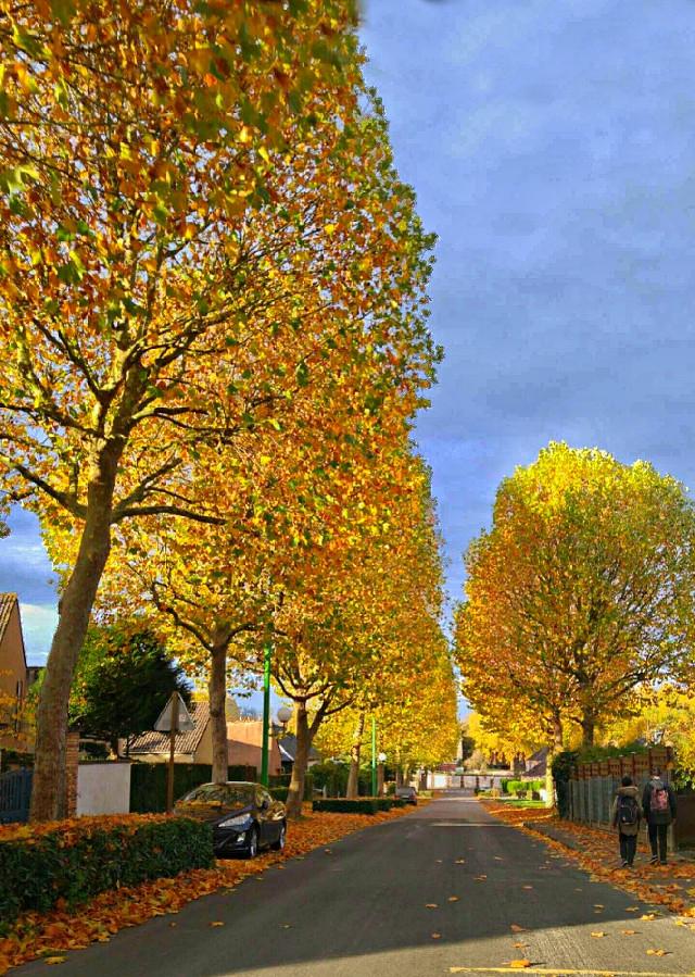 #colorful #freetoedit #nature #photography #autumn  #pi #picsart #sky #