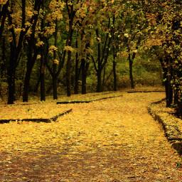 emotions nature a autumn
