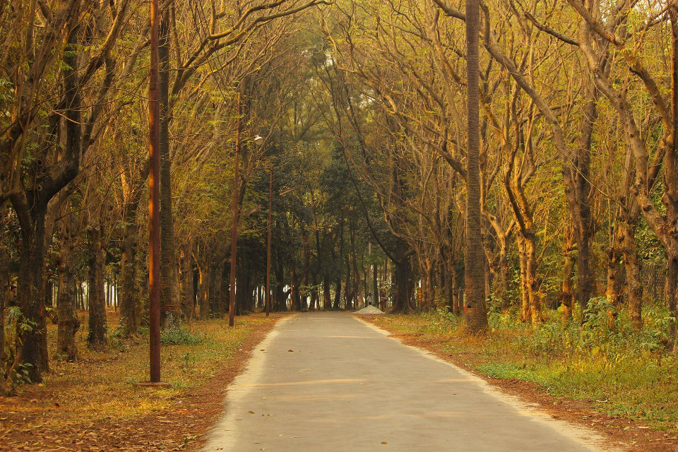 #winter #nature #yellow #tree #road #colorful #morning