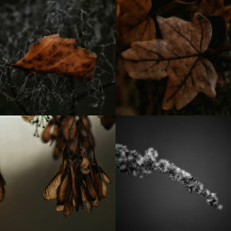 collage photography autumn