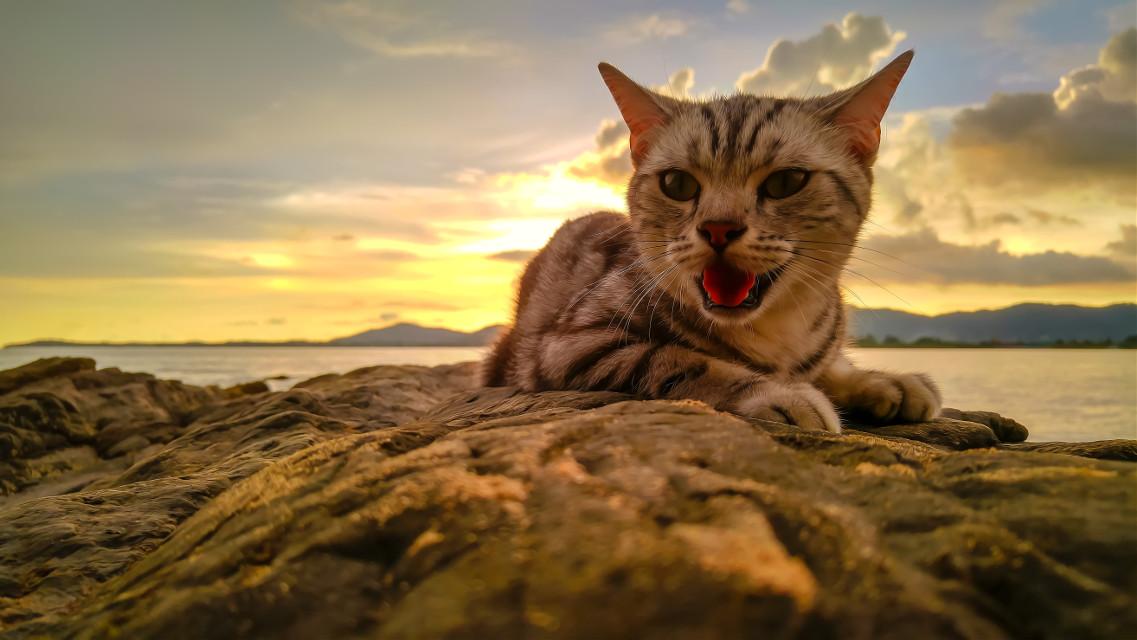 Chaba cat #บ้านแมวหนวด #แมว #cats #chill #holiday #beach #sea #sky #sunset #clouds #neko #stone #amzingthailand #phuket #thailand #trip #travel #island #smile #lgg4