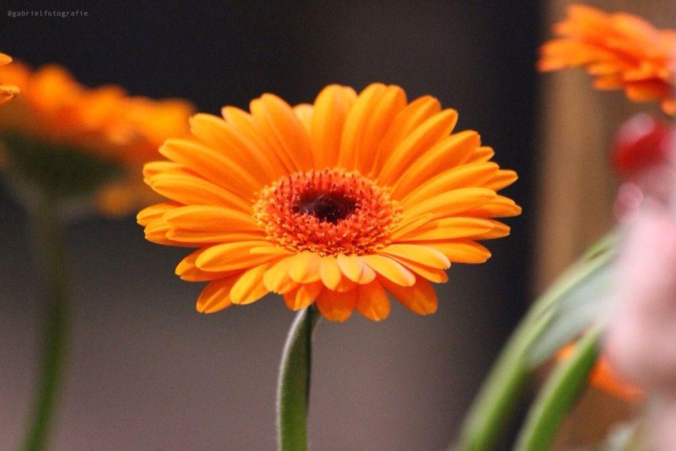 #flower #closeup #colorful