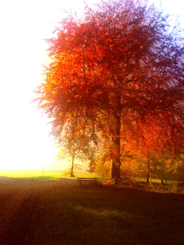 #fall#wapfall#wapautumn#tree#nice#leafs