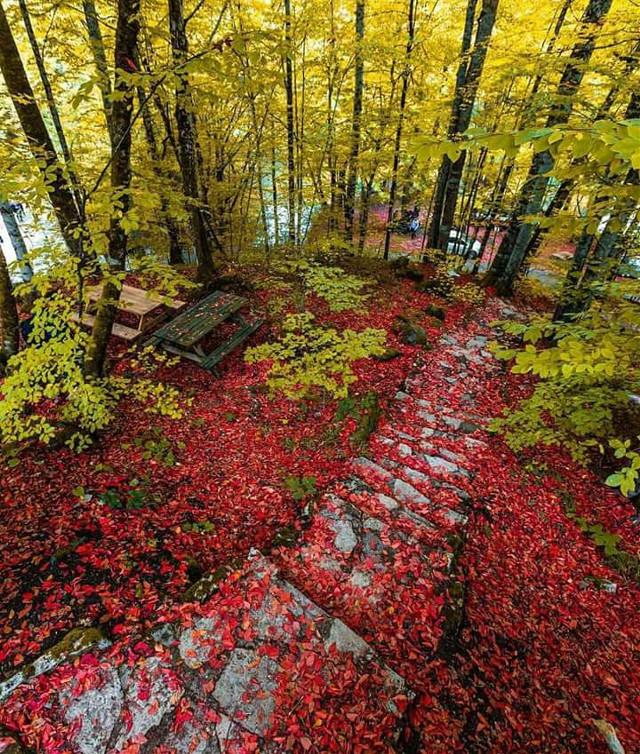 #freetoedit #nature #colorsplash #colorful #flower @melizzax @rfg99picsart @omertasdemir @raylmd @turkmen41 @anastasiarodionova1