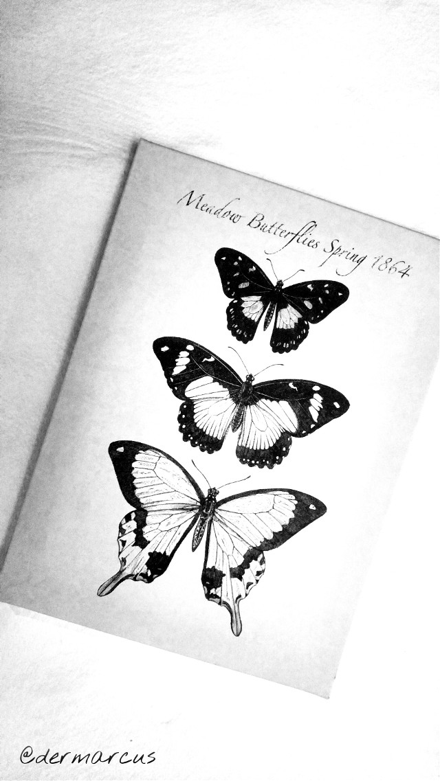 Good morning my dear friends 💝🙏🍀🍀  Here is something  #tilted in  #blackandwhite    #butterfly  #photography