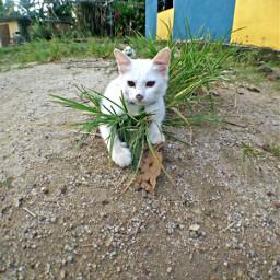 cute hdr freetoedit petsandanimals photography