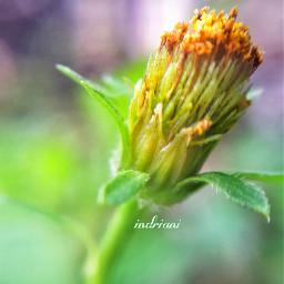 wildflower macro nature love me