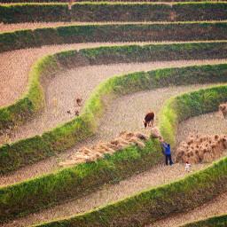landscape farm farmlife