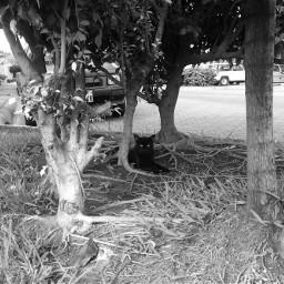 blackandwhite cat street photography