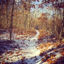 snow hikingtrails woods forest winter