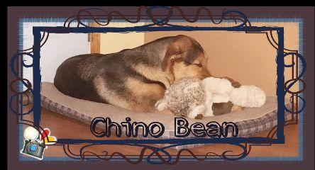 cute doggy teddy