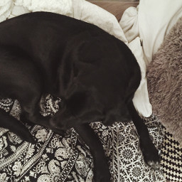 mybaby loveher dog black gem