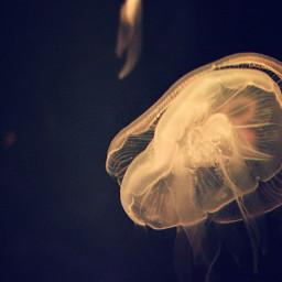 jellyfish light water trip travel