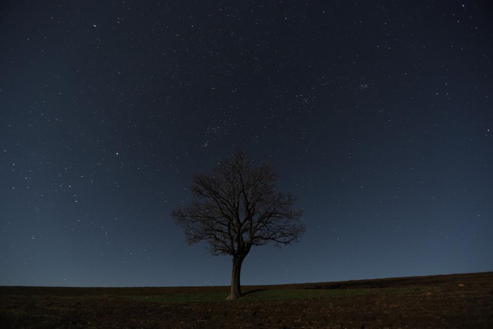 #freetoedit #interesting #night #tree #stars #sky