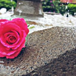 nature ros colorful plantas loveit