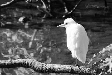 blackandwhite petsandanimals nature photography bird
