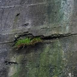 photography nature grass concret myinspiration