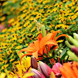 bokeh colorful colorsplash flower freetoedit