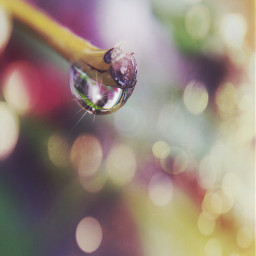 raindrop droplet nature photography bokeh