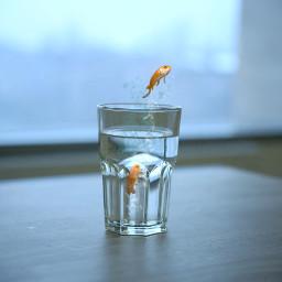 fish glass water freetoedit
