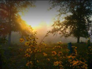 serinity calmdown breath flowers fog