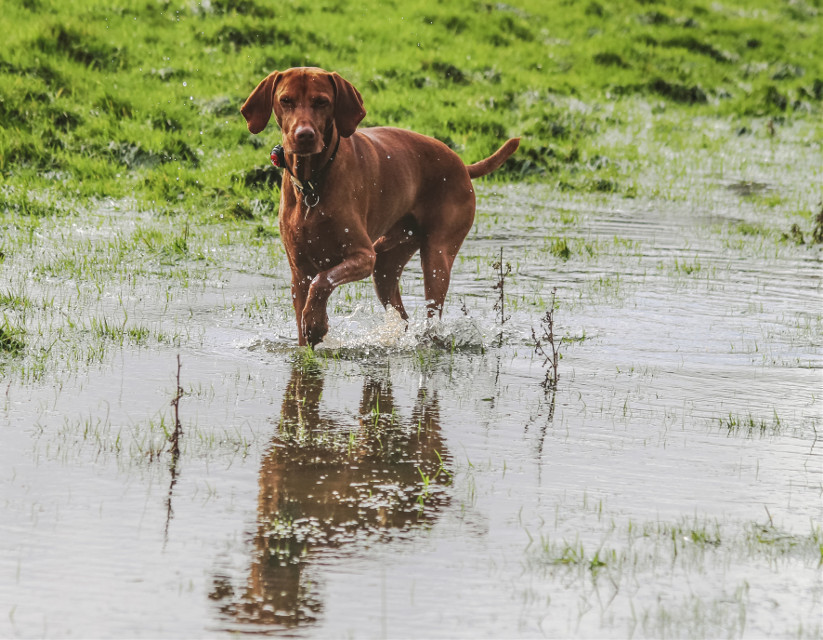 The #field is flooded. #timeforapaddle #pets&animals #mypet