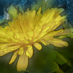 photography colorful flower nature pencilart