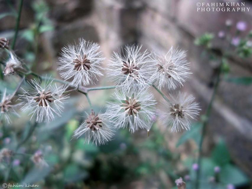 #wild_flower #lomo #bokeh #photography  © 2016 Allright Reserved By Fahim Khan P H O T O G R A P H #nature