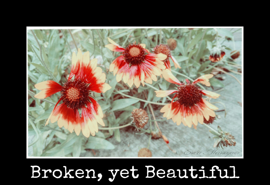 MindShift Day 48  Broken, yet Beautiful. Just because something is broken doesn't mean it is ugly. The true beauty of something is in how you see it.  #mindshift #day48 #beauty #vintageivory #broken #flowers #red #yellow #text #border