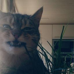 weird cat different