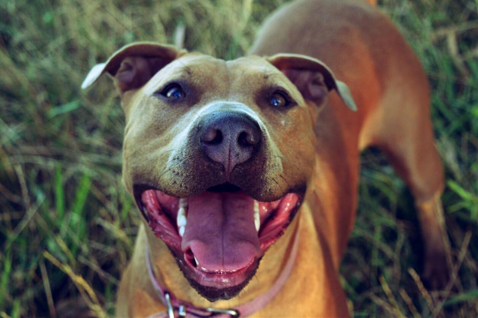 #love #love #love #dog 🐶🐶🐶♥♥♥  #beautiful #emotions #photography ♥