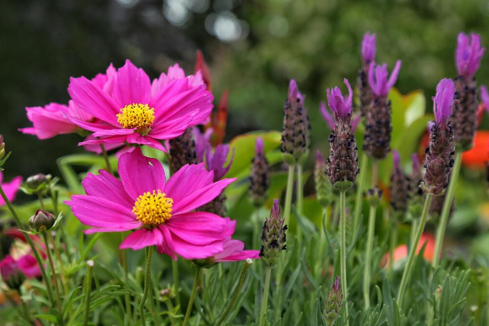 Bokeh.. #photography #nature #flower #bokeh #colorful
