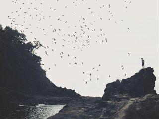 freetoedit nature blackandwhite birds people