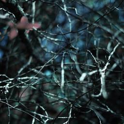 blue spikes forest dark nightmare