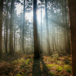 sunnyeffect photography nature colorful freetoedit