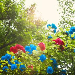 nature flower colorful colorsplash cute