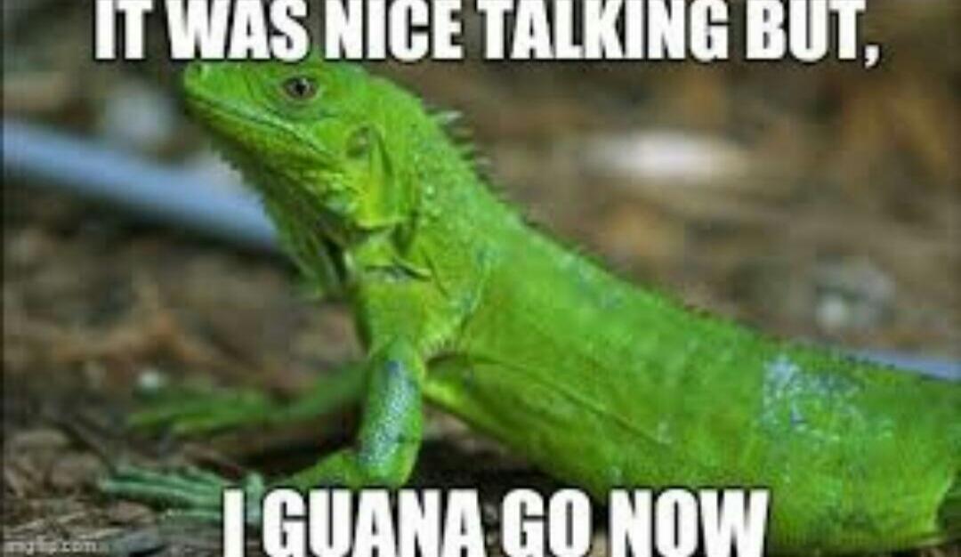 hahaha iguana memes meme go green