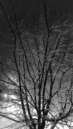 nature winter ice storm blackandwhite