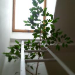 houseplants window green home