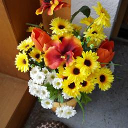 houseplant houseplants freetoedit colorful colorsplash