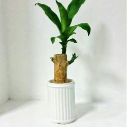 houseplant photography minimal