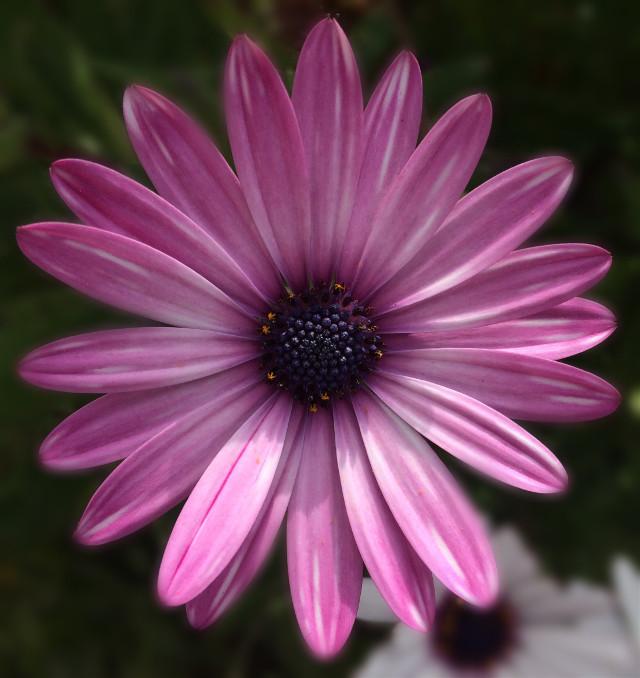 #travel #flower #blurry #mallorca