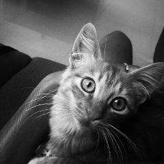 cats photography petsandanimals cute cat